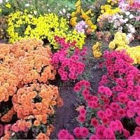 Особенности выращивания различных видов цветочных растений