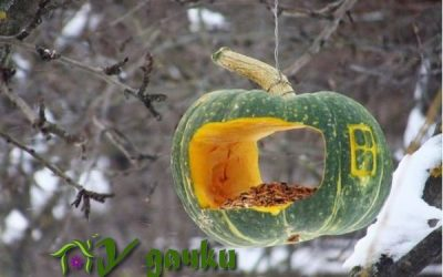 лунный календарь дачника ноябрь