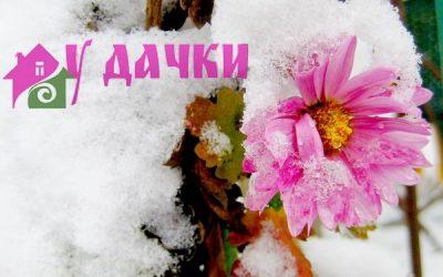 Зимние работы в саду и огороде