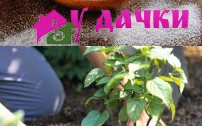 Как использовать соду в саду и огороде